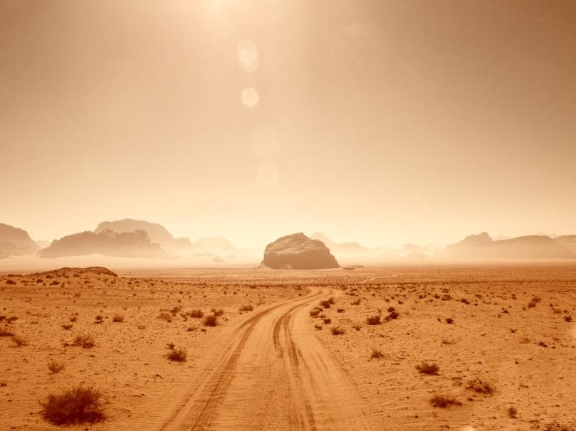 desert survival unsplash